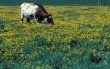 Ευρώπη: Φρένο στην κατανάλωση βοδινού και γαλακτοκομικών για να επιτευχθούν οι στόχοι για το κλίμα