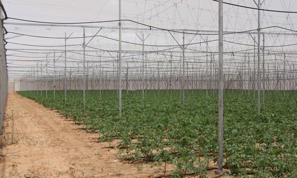 Δικτυοκήπια: Μια βιώσιμη καινοτομία στη γεωργία