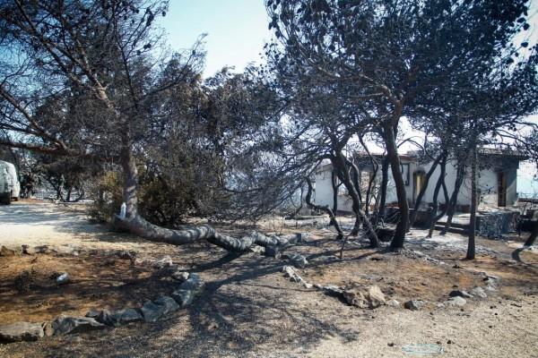 Στους 85 οι νεκροί, δύο ακόμη σοροί στο οικόπεδο της Αποκάλυψης