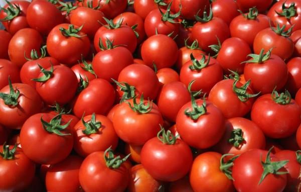 Κατασχέθηκαν 4,6 τόνοι ντομάτας με υπολείμματα φυτοφαρμάκων